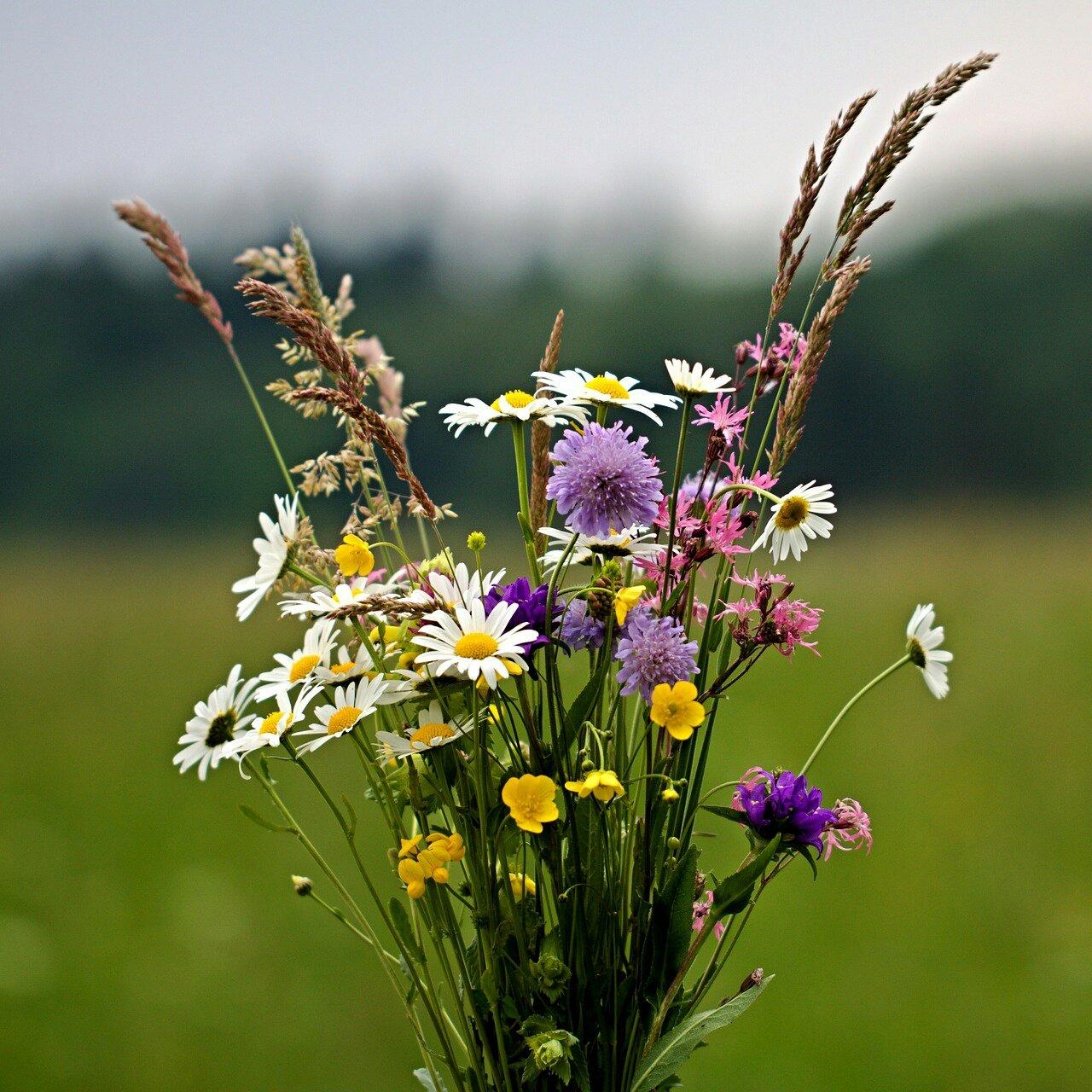 Картинки букет полевых цветов, для поздравительной