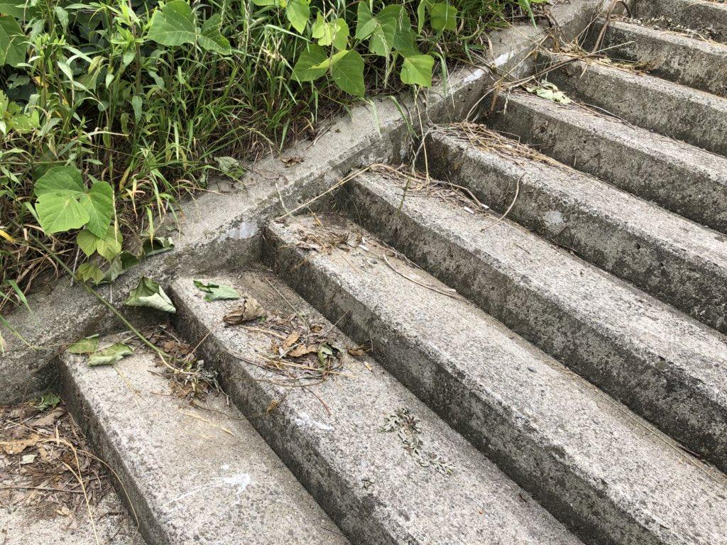 階段が絶好のポイントなのはアリ採集あるあるだと思う。ここに10分しゃがんだだけで15種くらいのアリが採れた。