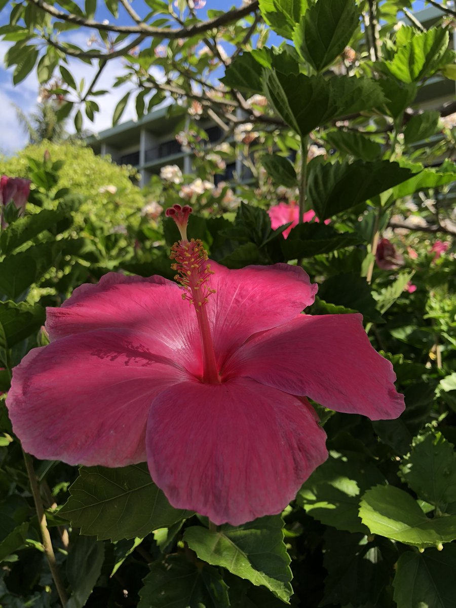Kaanapalibeachhotel On Twitter Blue Skies Warm Breeze And