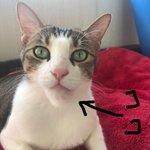 可哀想だけど笑ってしまうw蜂に刺された猫のアゴが完全にシャクレる!