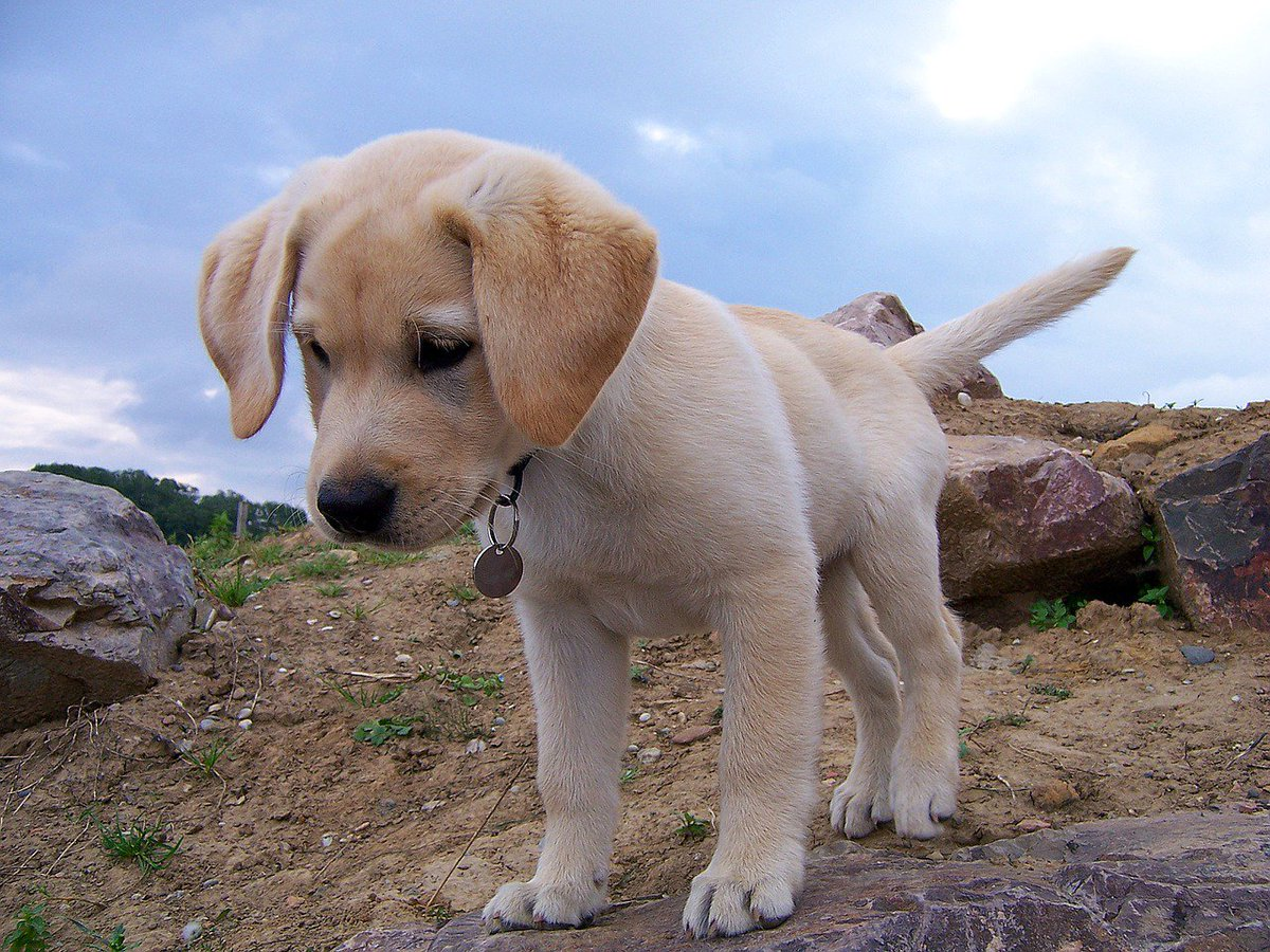 #puppy adventures! #dogfriends<br>http://pic.twitter.com/M6smW0mxxm