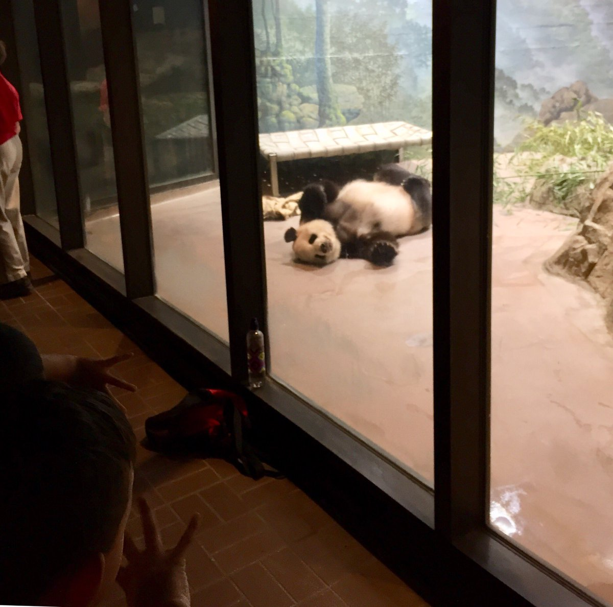 RT <a target='_blank' href='http://twitter.com/LorenaBev'>@LorenaBev</a>: Fun times at the zoo today! 🐼🐘🐊 <a target='_blank' href='http://twitter.com/apscspr'>@apscspr</a> <a target='_blank' href='https://t.co/xmKfJ4pQzU'>https://t.co/xmKfJ4pQzU</a>
