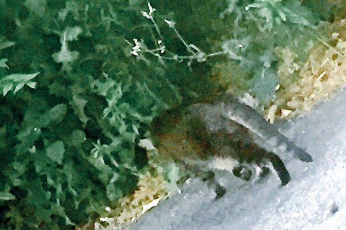 CORTEZ6329の画像