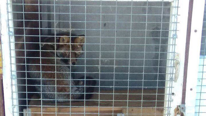 Save the fox! Close the mini-zoo in the hotel Ranch in Moscow! Plz sign: https://t.co/PaFiDPlwKD https://t.co/143IKAAwxu