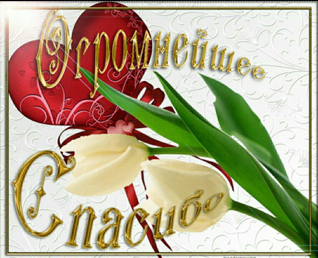 Латыни переводом, открытки с пожеланиями благодарности