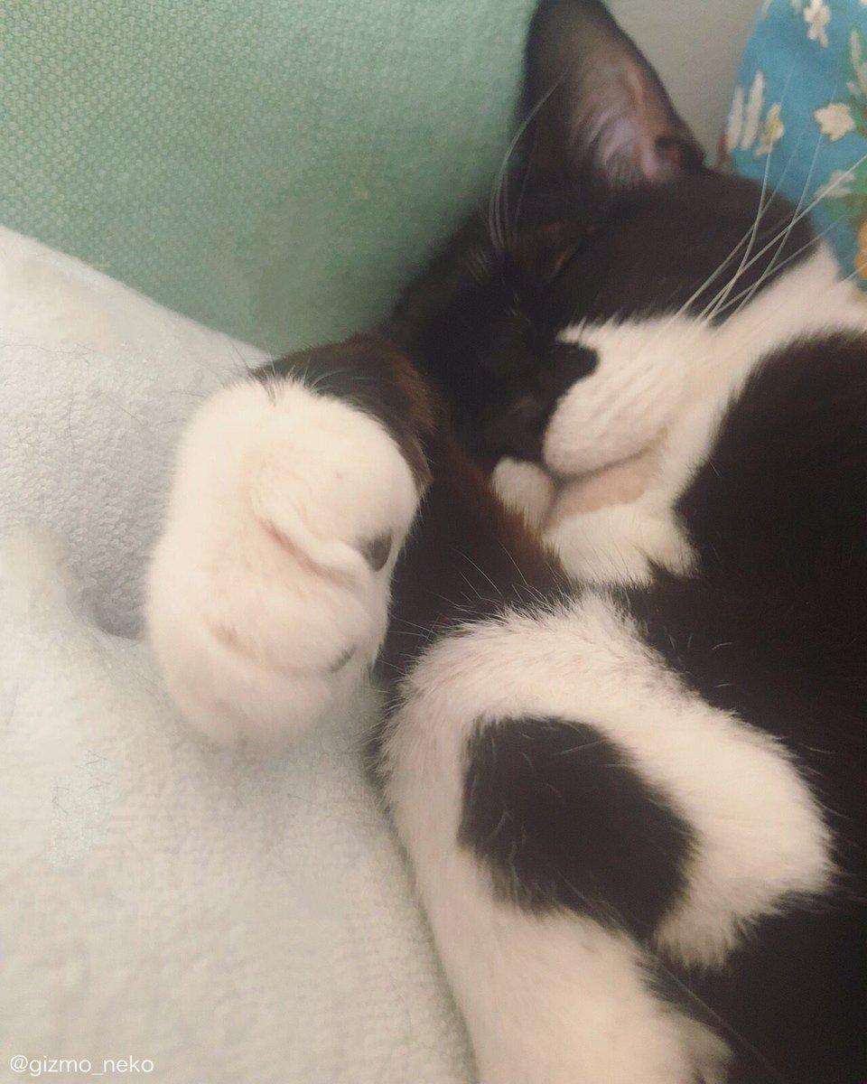 珍しく猫みたいな 寝相してる