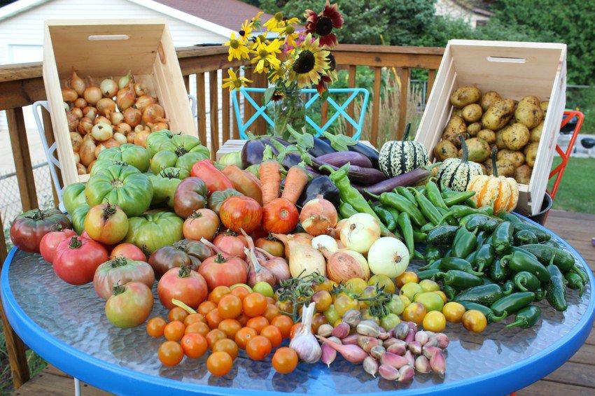 Картинки сбор урожая на огороде, картинки