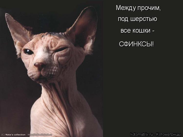 Картинки и приколы с лысыми кошками, любимому