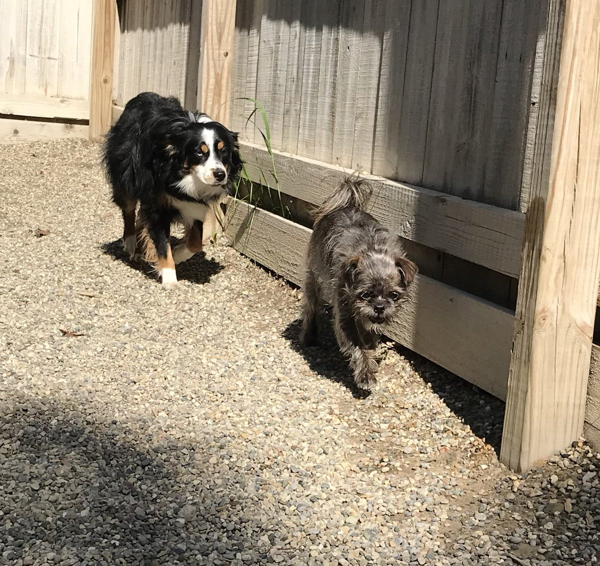 Axel and Lola play follow the leader!