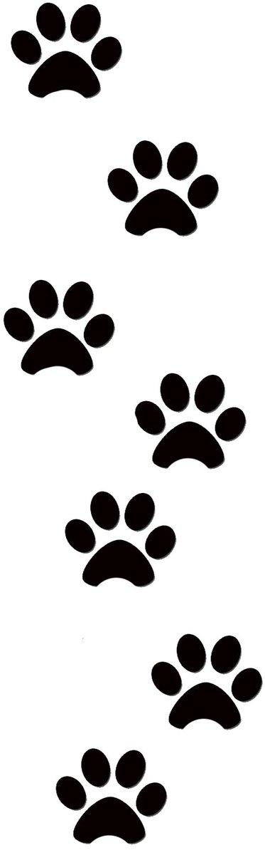 Картинки лапки котика нарисованные