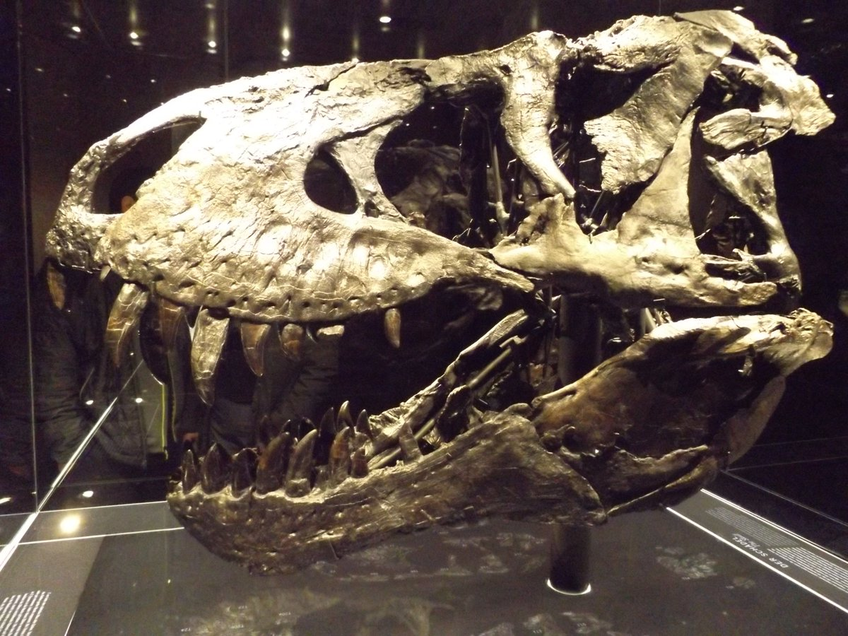 Emily Roberts On Twitter Tristan The T Rex Poor Thing Has An