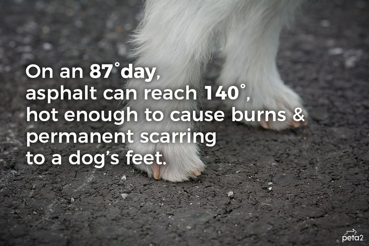DYK? Hot pavement is dangerous for dogs! #NationalHeatAwarenessDay<br>http://pic.twitter.com/y89HGtoEt7