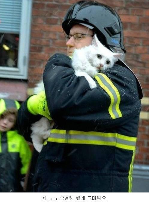화재에서 구출된 고양이 덴마크 vs 러시아 https://t.co/3aVSoEQOVH
