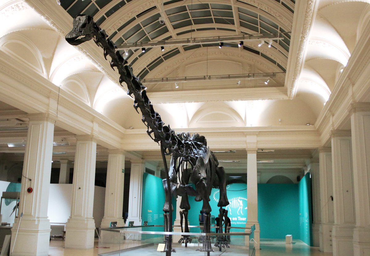 Dippy is officially a Brummie! The second stop of #DippyOnTour is @BM_AG, where he'll learn about the link between dinosaurs and birds. Find out more:  https://t.co/fYbZ87owzi