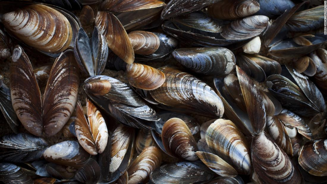 Shellfish found in Washington's Puget Sound have tested positive for the prescription opioid oxycodone, as well as for antibiotics, antidepressants and chemicals found in cleaning products https://t.co/OqQLAabqD2