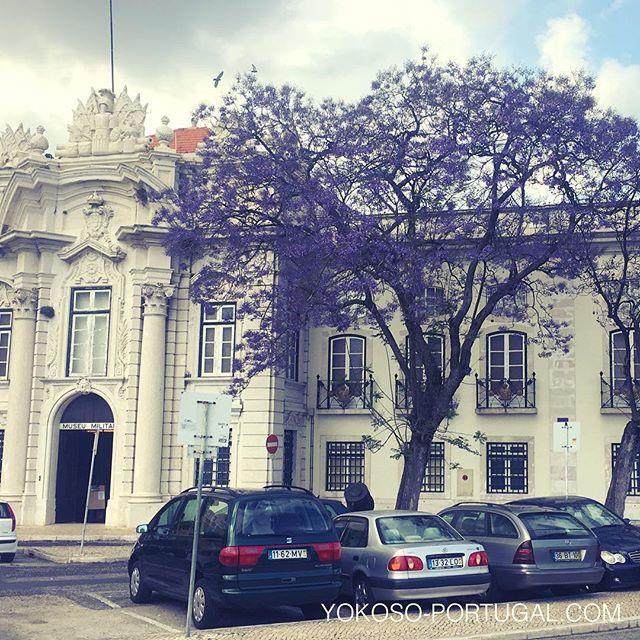 test ツイッターメディア - 軍事博物館前のジャカランダ。いつの間にか咲いていました。 #リスボン #ポルトガル https://t.co/sDJTvwMLUx