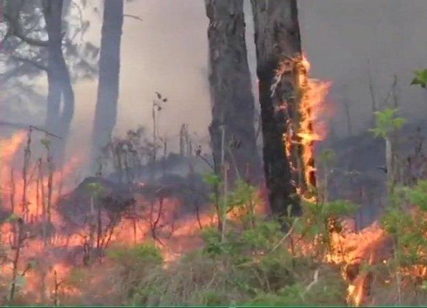 જમ્મુ-કાશ્મીર: વૈષ્ણોદેવીના ત્રિકૂટા પર્વતનાં જંગલોમાં લાગેલી આગમાં 5000 લોકો ફસાયા