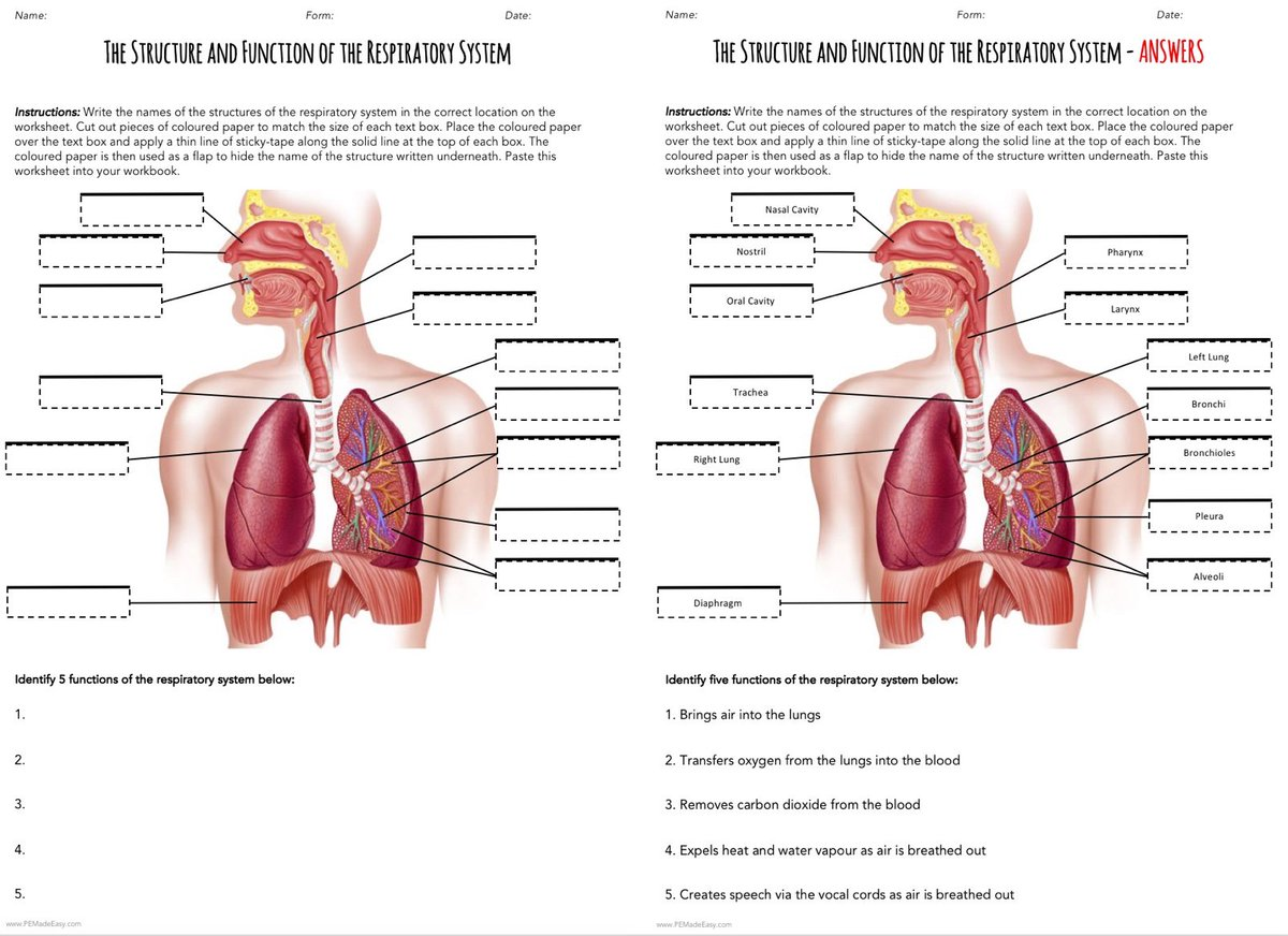 """Airlie & Heath sur Twitter : """"R E S P I R A T O R Y - S Y S T E M Intended For The Respiratory System Worksheet"""