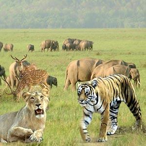 #Netaji Latest News Trends Updates Images - sawhneytours