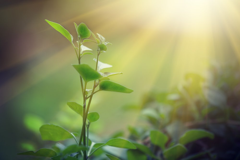 Physicists see quantum effects in photosynthesis, which could lead to better solar panels and energy storage: https://t.co/e2dAJdAp8C