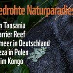 Selbst vor Naturschätzen machen wir keinen Halt und verbrennen, verschmutzen und wildern weiter. Das sind die fünf besonders bedrohten Naturerbestätten. Auch Deutschland hat einen traurigen Kandidaten. Mehr Infos: https://t.co/tqFta8cwJ5
