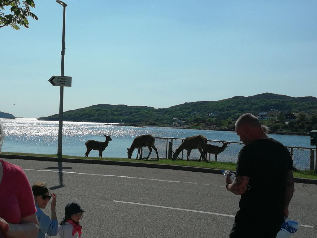 In Lochinver NW Scotland the deer are... well let&#39;s say &quot;habituated&quot;! @Team4Nature300<br>http://pic.twitter.com/7qjdMkDeqU