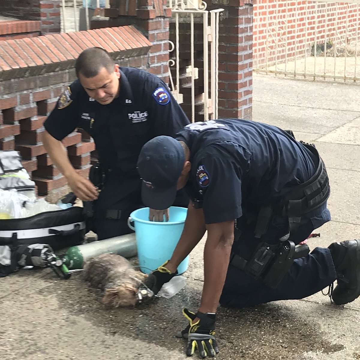 NYPDnews photo