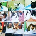 他にあったでしょw動物病院のカレンダーが来院した時の写真でみんな真顔!