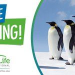 Image for the Tweet beginning: BirdLife is recruiting an Administration