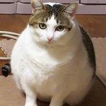 君は本当に猫なの?wまんまるになってふくふくとしている猫が可愛すぎるw