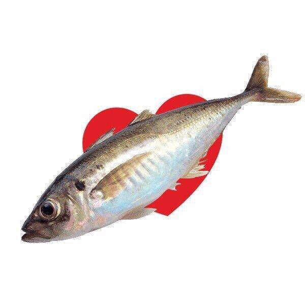 ผลการค้นหารูปภาพสำหรับ ปลาทับใจ มีม