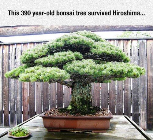 Funny Memes On Twitter Srsfunny Very Old Bonsai Tree Memes Meme