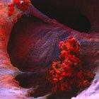 online Human Pathogenic Fungi: Molecular