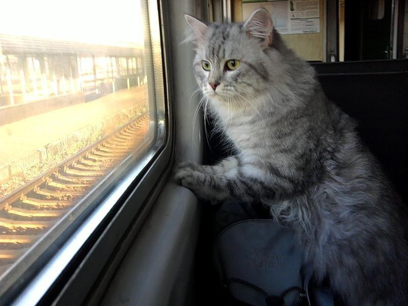 30-летием мужчине, веселые картинки в поездах