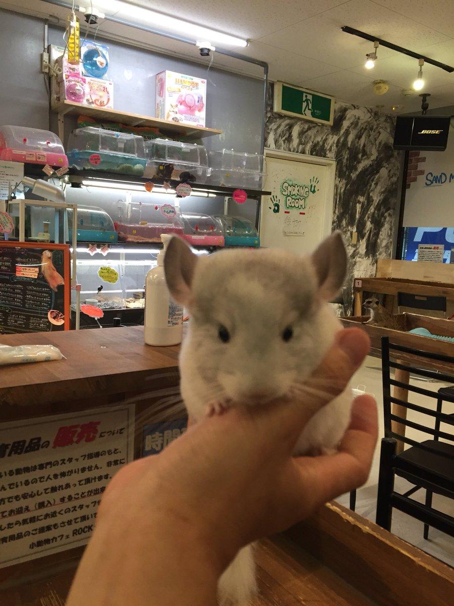 小動物 カフェ ロック スター