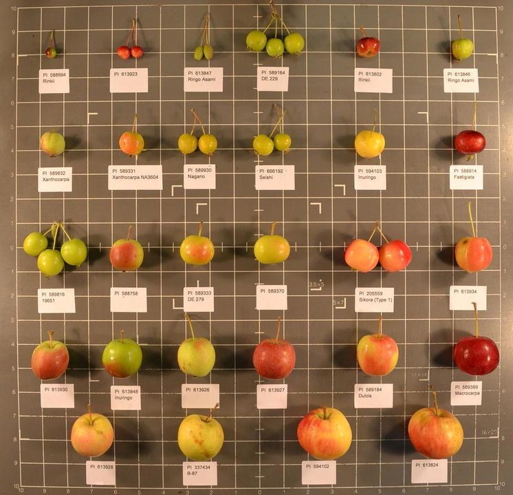 download Untersuchungen zur kostenoptimalen Dimensionierung von Werkstückpuffern