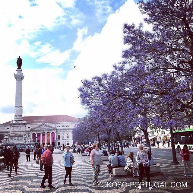 test ツイッターメディア - 本日のロッシオ広場のジャカランダ。もうすぐ満開です。 #リスボン #ポルトガル #ジャカランダ https://t.co/qzyg1hUqJJ