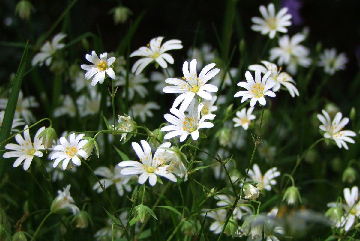 Eyesshare On Twitter Wild Daisies Flowers Httpst