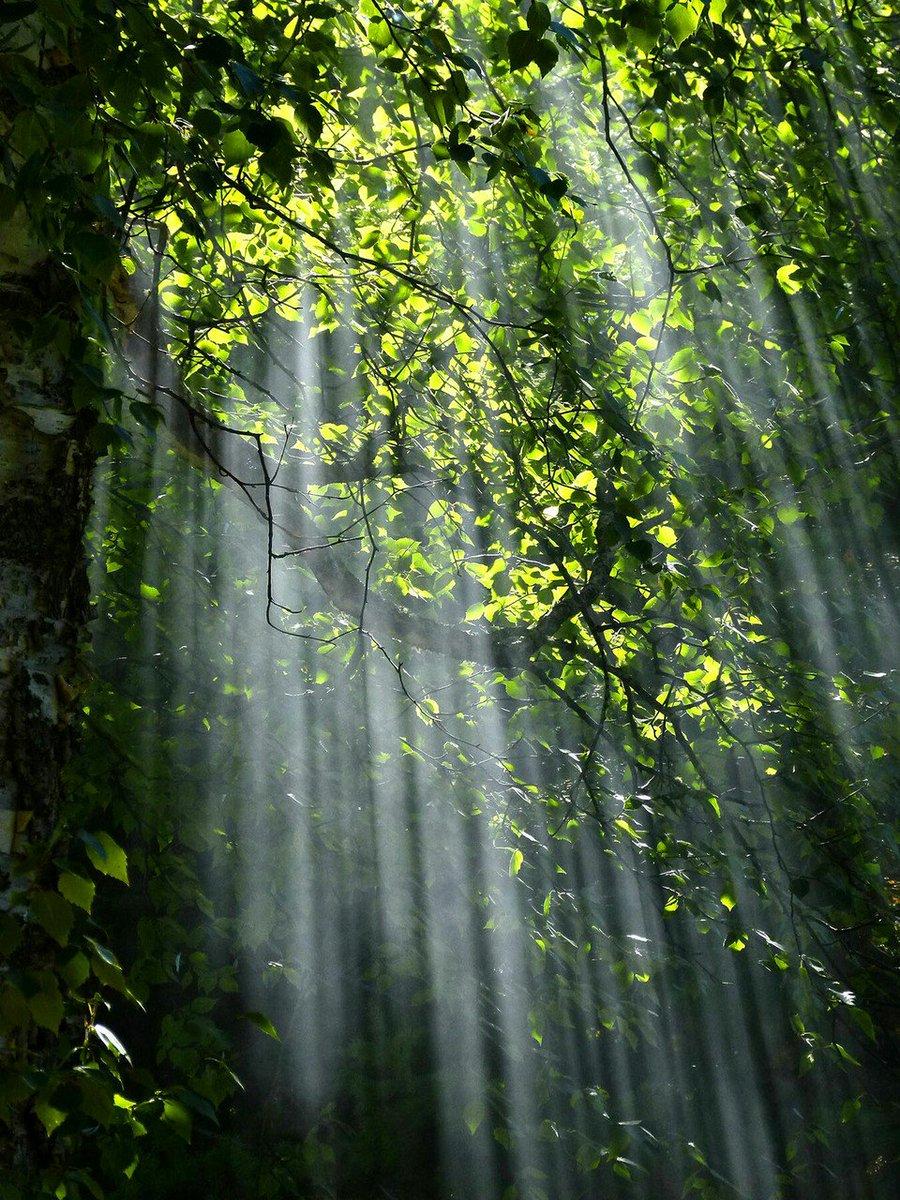 """Résultat de recherche d'images pour """"raios de sol na floresta"""""""