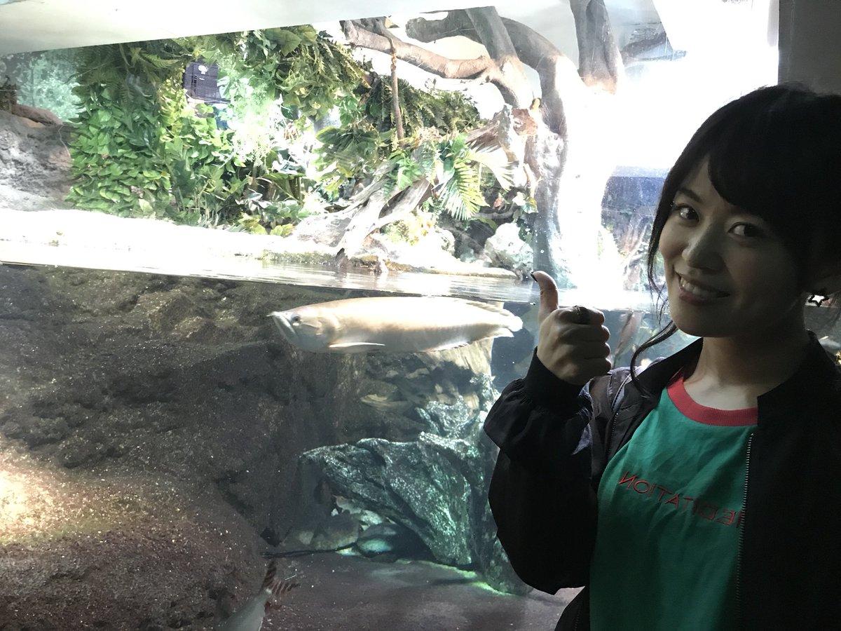 アマゾンッッッϵ( 'Θ' )϶ #サンシャイン水族館 #アマゾンでは長女 #つぶあい