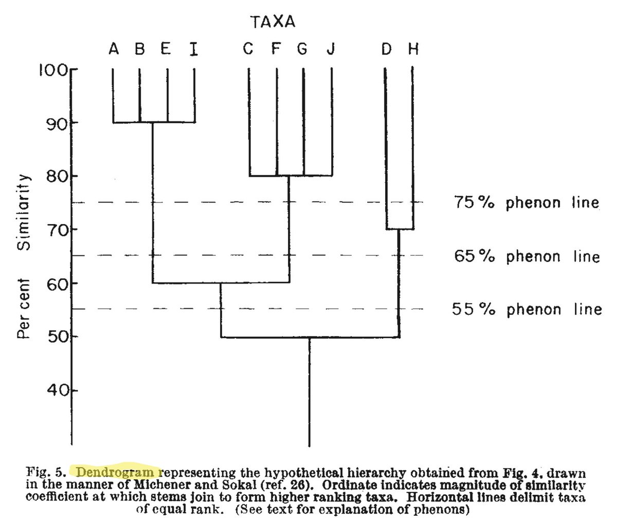 How To Draw Up A Hierarchical Tree Diagram For Taxonomic