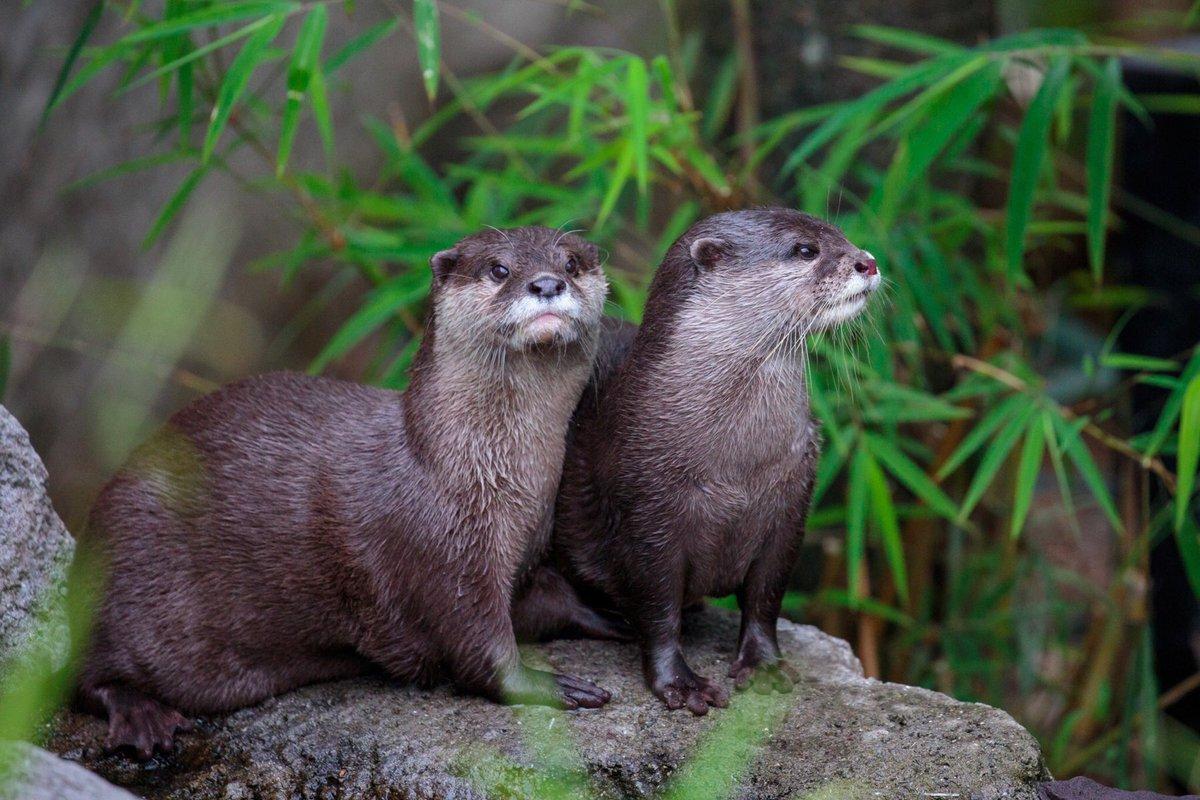 Auckland Zoo aucklandzoo Twitter