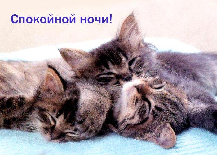 Прикольная картинка кот спокойной ночи, грусти подружка картинки