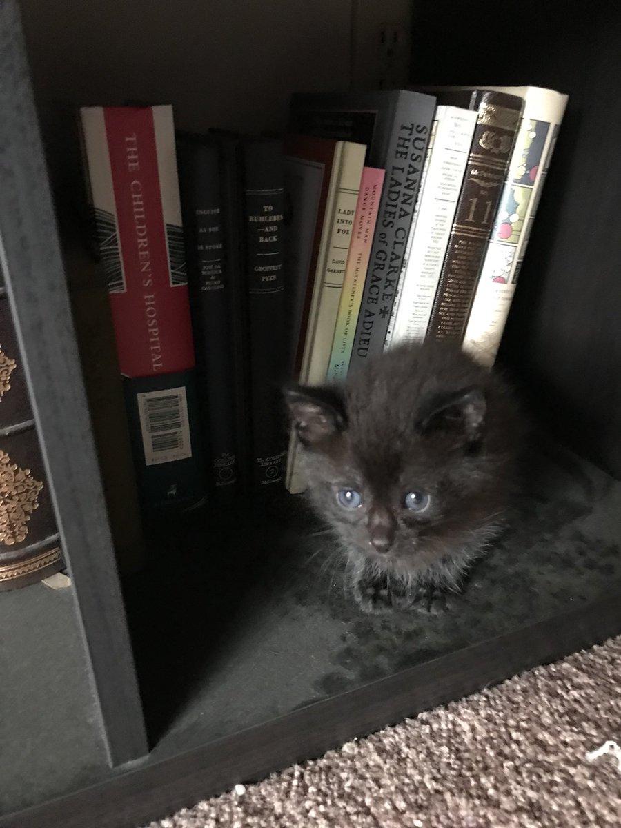 read the little black
