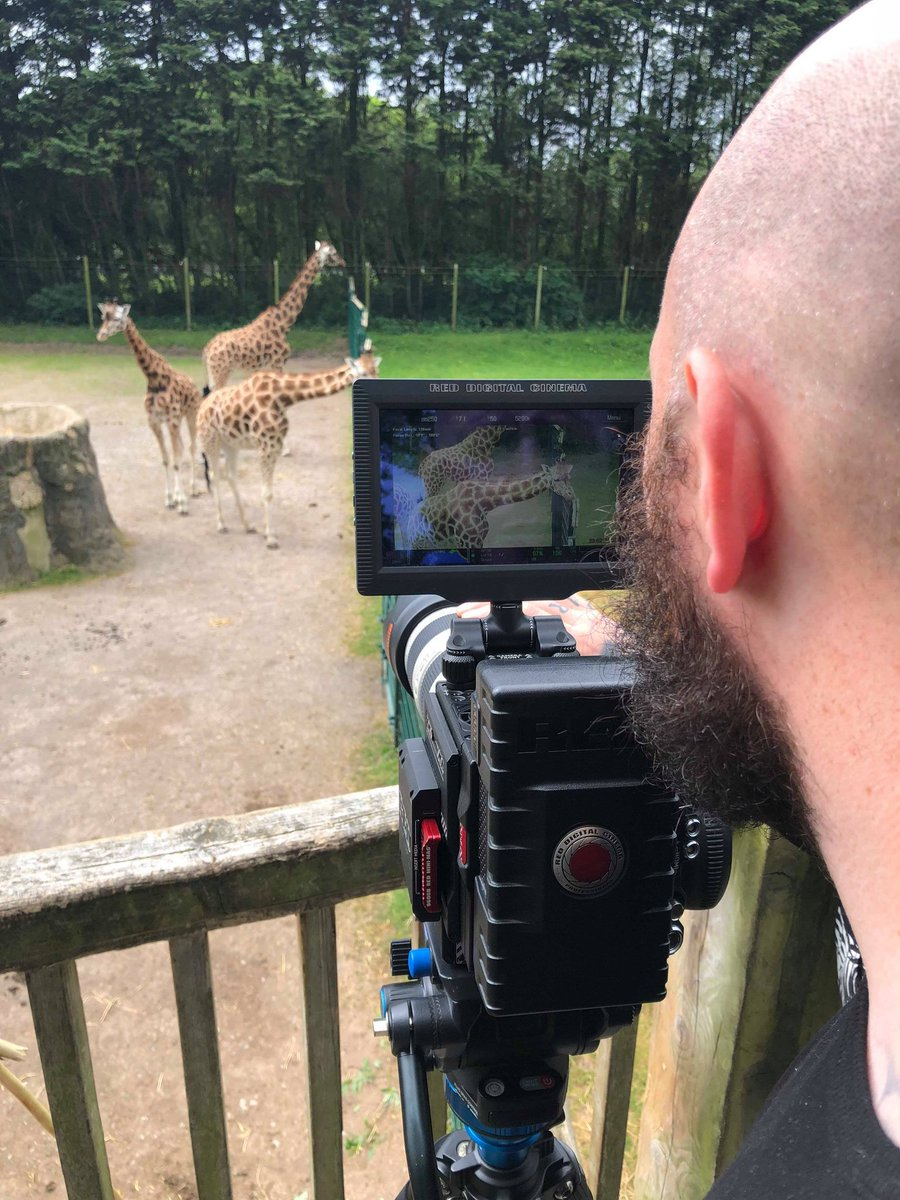 Big Brand Ideas On Twitter Filming A Tv Ad For Blackpoolzoo Today