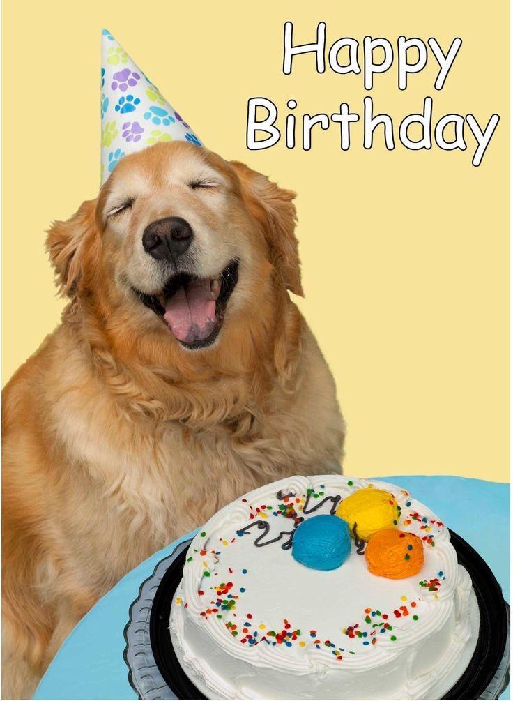 Картинки, картинки с собаками поздравление с днем рождения