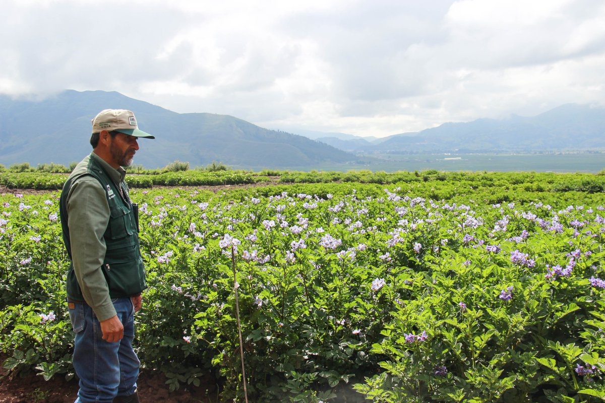 Inia Perú S Tweet Andenes Tiene 33 Terrazas Desde 3350