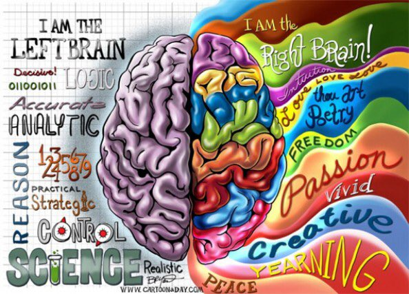 the left and right brain theory Here's the old theory: if the left side of your brain is dominant, you're more logical and good with mathematics and language if you're a right brainer, you're [however], this has nothing to do on any level with the different functions of the [brain's] left and right hemispheres, anderson told the bbc.