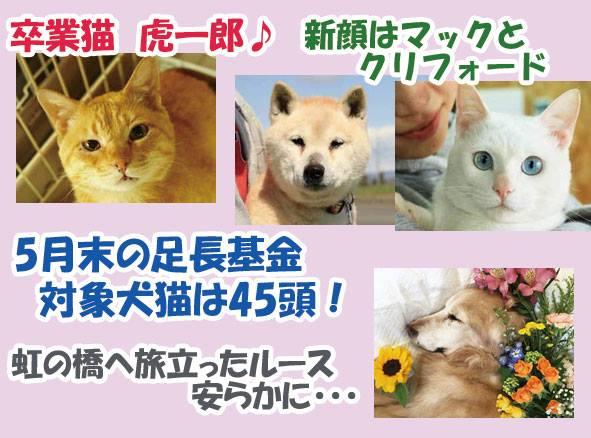 """hama on Twitter: """"5月は猫エイズキャリアの虎一郎に幸せな出会いが ..."""