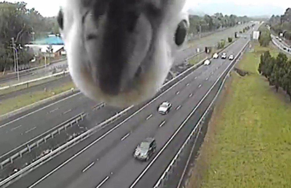 Cacatua faz 'photobomb' em câmera de trânsito na Austrália https://t.co/7cAH9AEzow #PlanetaBizarro #G1